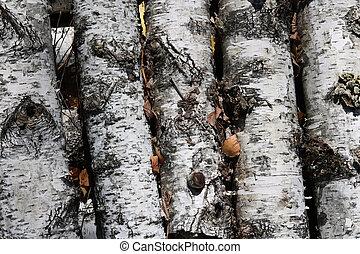 birch logs with black and white birch bark