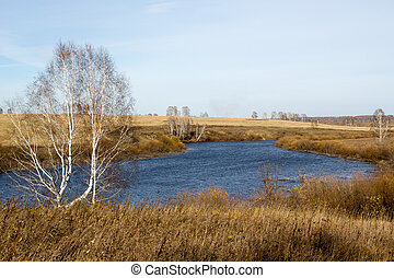 Birch on a background of autumn forest and lake