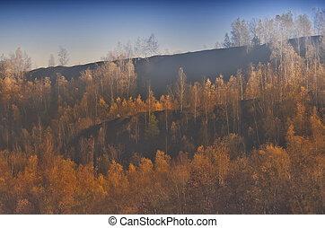 Birch on a mine dump