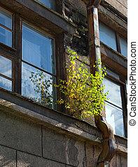 birch on a window