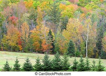 birch tree at autumn forest edge