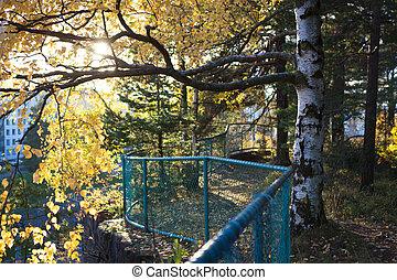 Birch tree at park