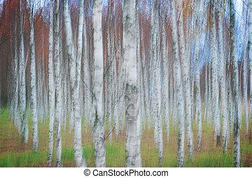 Birch tree forest in autumn,