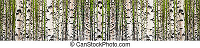 Birch tree forest - Wallpaper image of birch tree forest in...