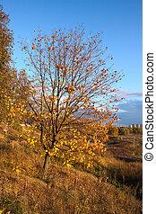 Birch tree in the autumn background