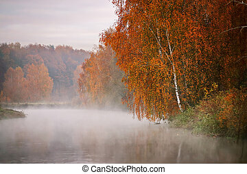 Birch tree near the river on a misty morning