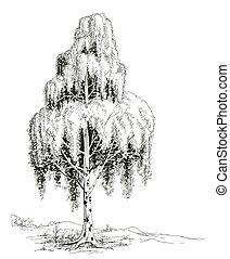 Birch tree sketch vector