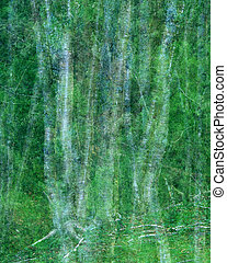 Birch tree trunks - Abstract double exposure of birch tree...