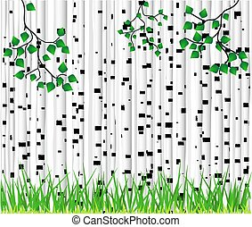 Birch trees and grass background