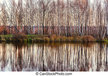 Birch trees by the lake at autumn evening time.