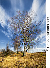 birch trees in a summer forest under sun sky