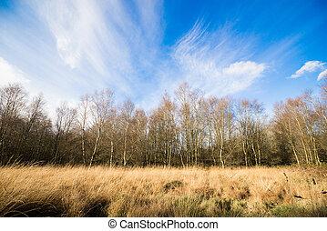 Birch trees in autumn nature