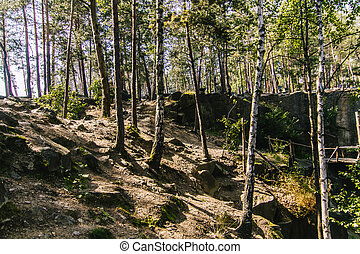 Birch trees in summer forest with a lot of green on background