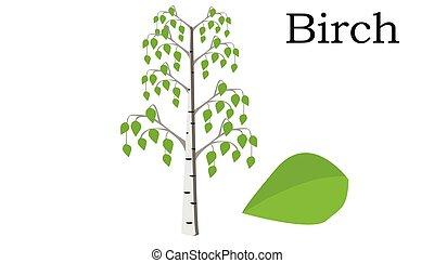 Birch  Trees vector element. vector green