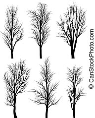 Birch trees without leaves. - Set of vector silhouettes of...