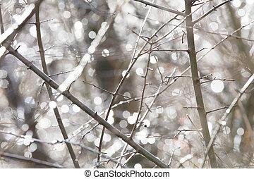 Birch trunk in nature