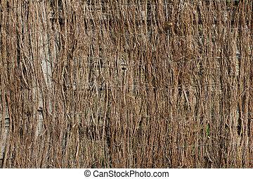 Birch twig texture