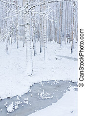 Birch wood forest covered in snow