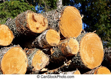 Birch Wood Logs