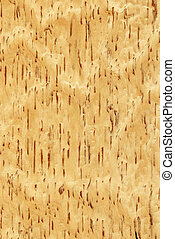 Birch (wood texture)