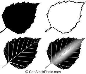 birch,(Betula verrucosa), - birch, Betula verrucosa, vector,...