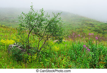 Birches and willow-herb