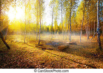 Birches in autumn park in the morning
