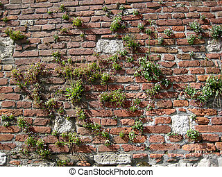 A medieval brick wall of a fortress with plants