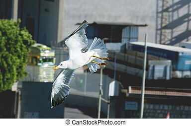 bird., カモメの飛行, 上に, harbor.