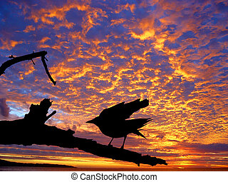bird against sunset - Black crow silhouette against the...