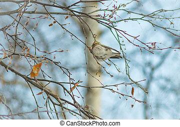 bird on a blue background