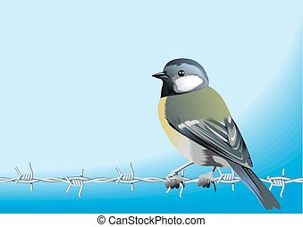 bird and barbed wire