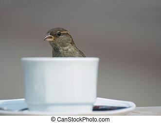 bird and coffee
