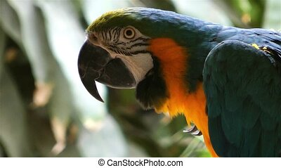 Bird Animal Colorful Parrot