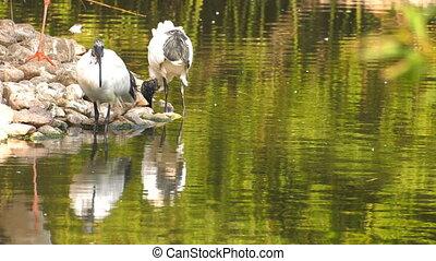 Bird Animal near the Lake