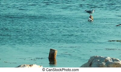 Bird Animal Seagull in Sea