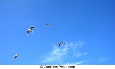 Bird Animal Seagulls Flying on Clear Blue Sky