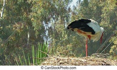 Bird Animal Stork