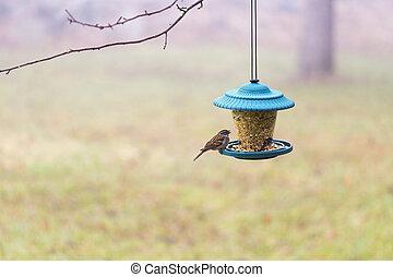 Bird at a Feeder