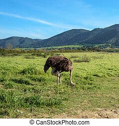 Bird at an Ostrich Farm