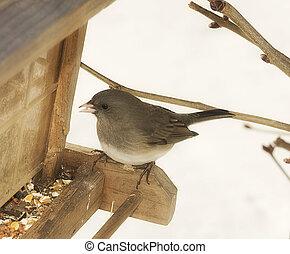 Bird at feeder - Bird feeding at feeder