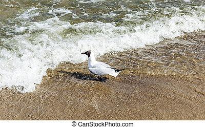 bird at the beach