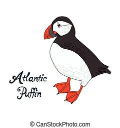 Bird atlantic puffin vector illustration