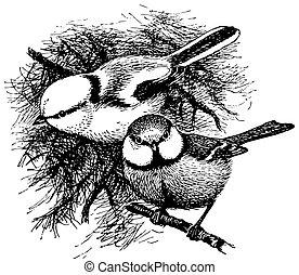 Bird Azure Tit - Birds Azure Tit