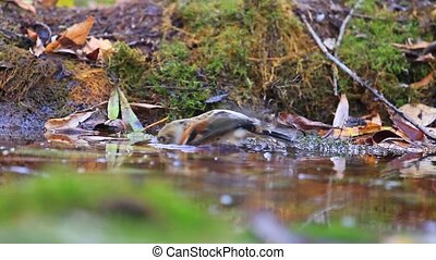 bird bathed in the water in the autumn forest