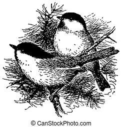 Birds Black-capped Chickadee