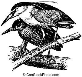 Bird Black-crowned Night Heron - Birds Black-crowned Night...