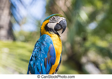 Bird Blue-and-yellow macaw standing with branches  of tree background
