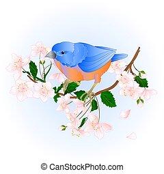 Bird Bluebird on an branch wild Cherry vector