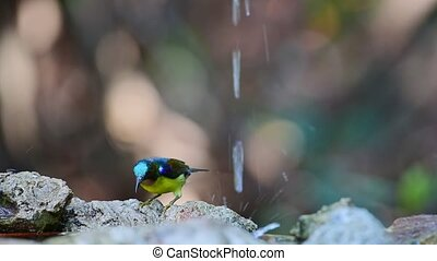 Bird (Brown-throated sunbird) in nature wild